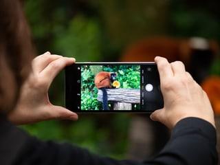Smartphone-Fotokurs im Zoo Zürich.