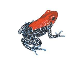 Illustration Rotrücken-Baumsteiger