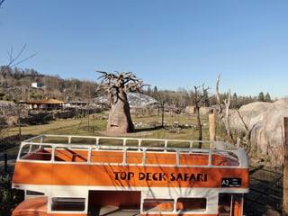Safaribus in der Lewa Savanne im Zoo Zürich.