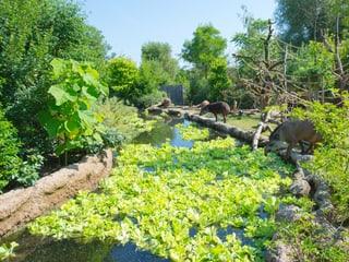 Pantanal im Zoo Zürich