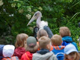 Symbolbild Schule im Zoo Zürich