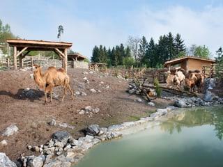 Mongolische Steppe im Zoo Zürich