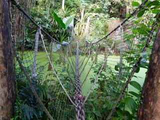 Nebenwege im Masoala Regenwald