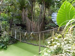 Nebenweg/Erlebnispfad im Masoala Regenwald
