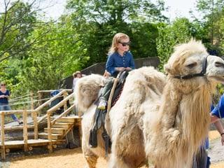 Kamelreiten im Zoo Zürich