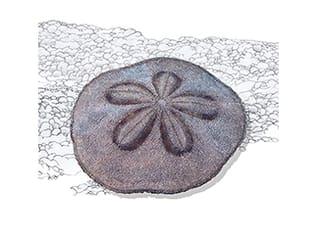 Illustration Sanddollar