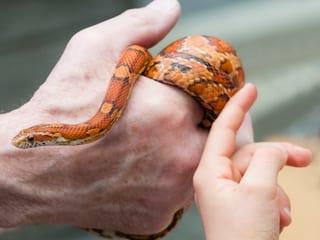 Schlangenpräsentation am Infotisch des Freiwilligenteams im Zoo Zürich