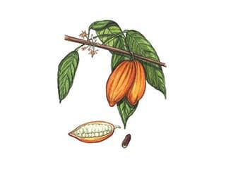 Illustration Kakao