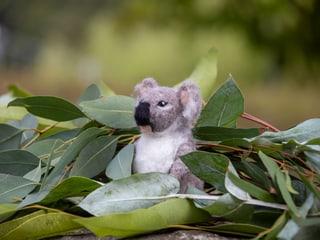 Kursbild Koala filzen.