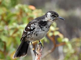 Leadimage Landvogelmonitoring 2