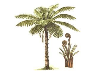Illustration Baumfarn