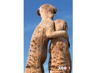 Zoo-Poster Erdmännchen