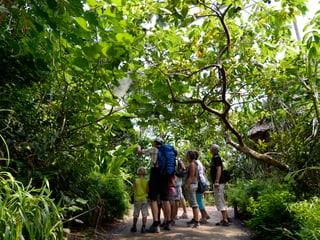 Besucher im Masoala Regenwald im Zoo Zürich