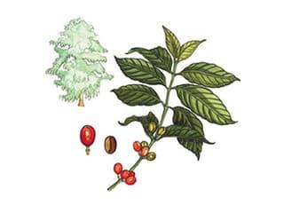 Illustration Kaffee