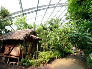 Betsimisaraka-Haus im Masoala Regenwald
