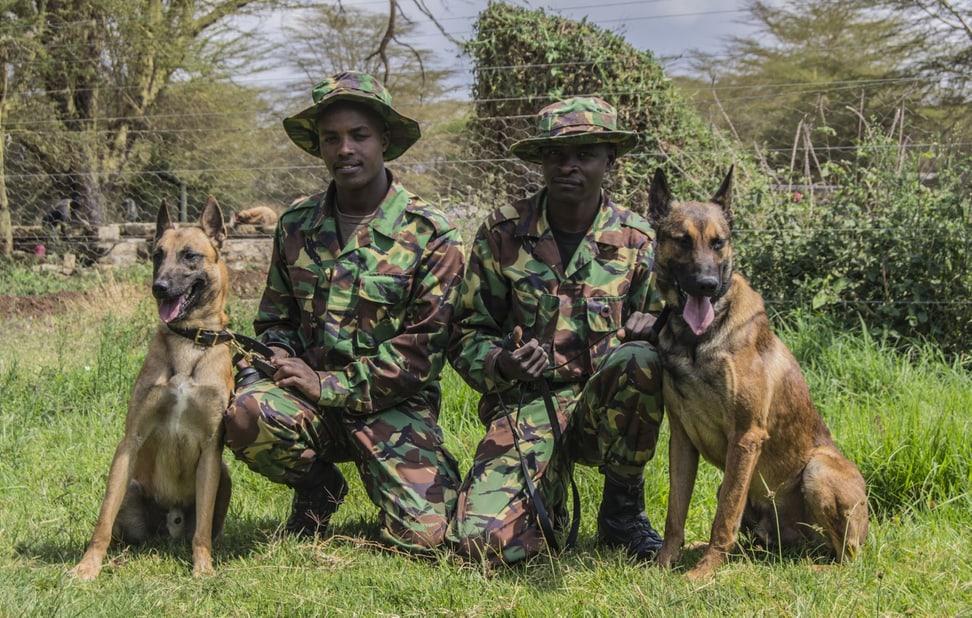 Tracker Dogs mit ihren Hundeführern.