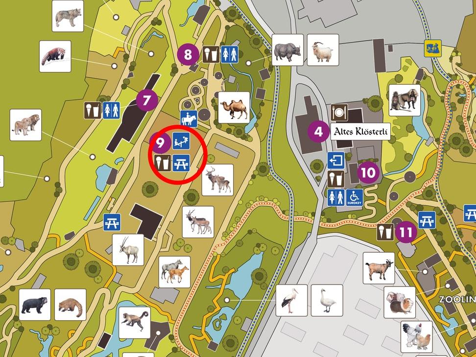 Picknick-Platz Trampeltiere Zoo Zürich