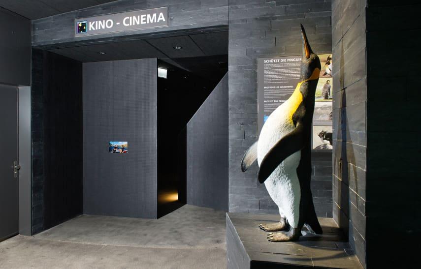 Kleinkino im Aquarium des Zoo Zürich.