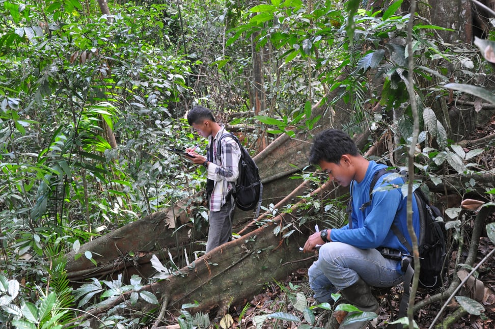 Forschung Sumatra Lebensraum Factsheet