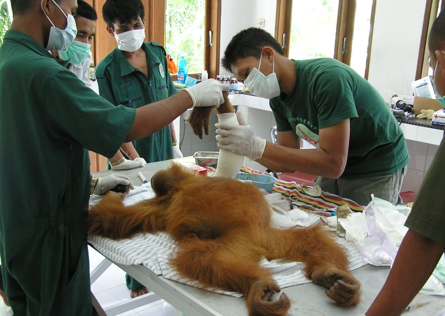 Veterinärstation in der Quarantänestation Batu Mbelin in Sumatra.
