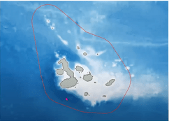 "Screenshot von Webinar ""Shark Ecology at the Galapagos"