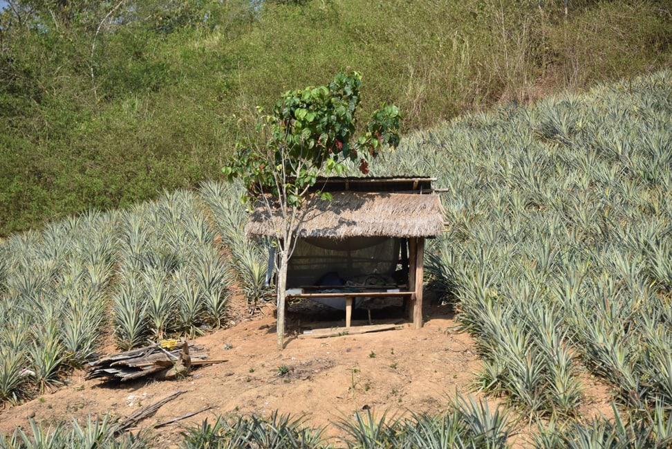 Bauern Kaeng Krachan
