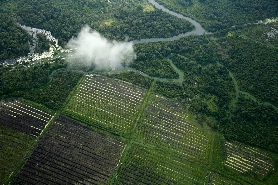 Plantagen und Regenwald in Sumatra.