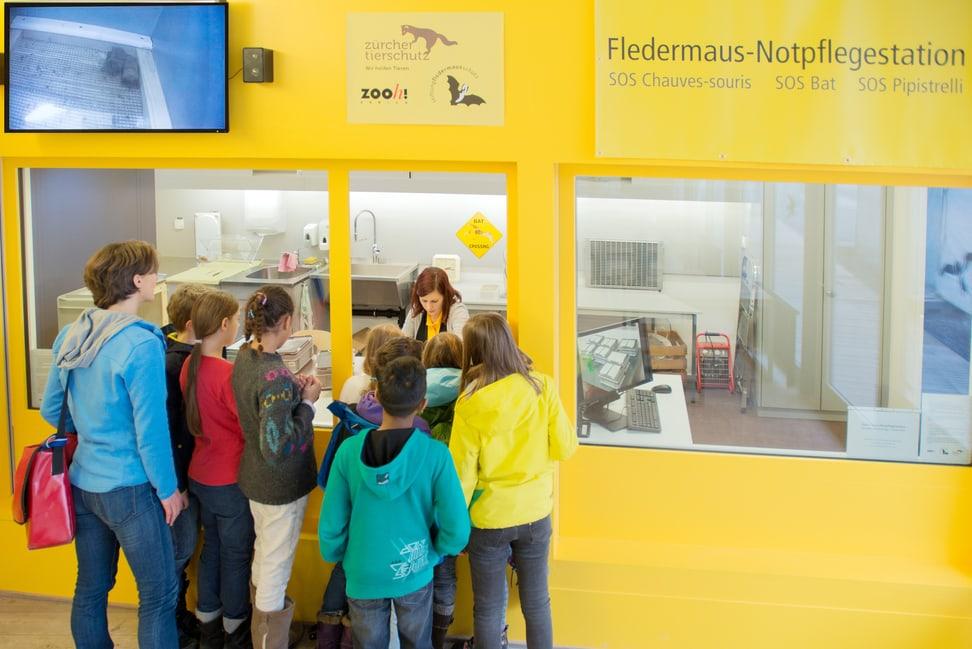 Fledermaus-Notfplegestation im Zoo Zürich.
