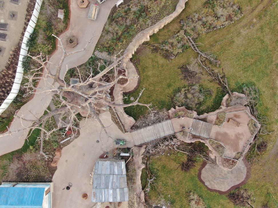 Blick auf Baobab und Steg in der Lewa Savanne im Januar 2020.