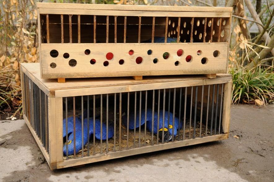 Ausstellung Illegaler Tierhandel im Pantanal.