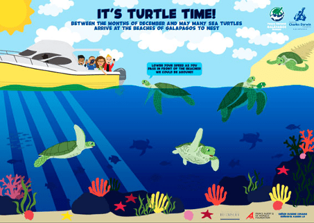 Turtle Time Grafik