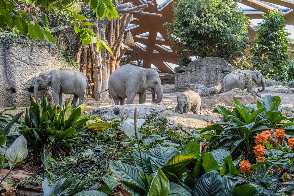 Elefanten Omysha, Umesh, Indi, Chandra Bild: Albert Schmitdmeister