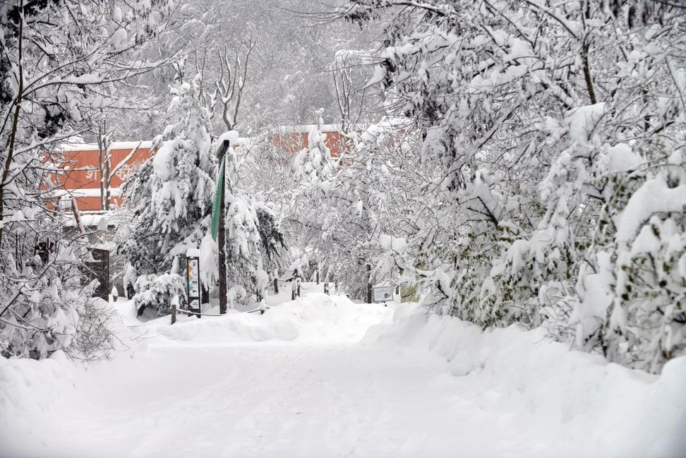 Tiefverschneiter Zoo, im Hintergrund das Löwenhaus. 15.1.2021.