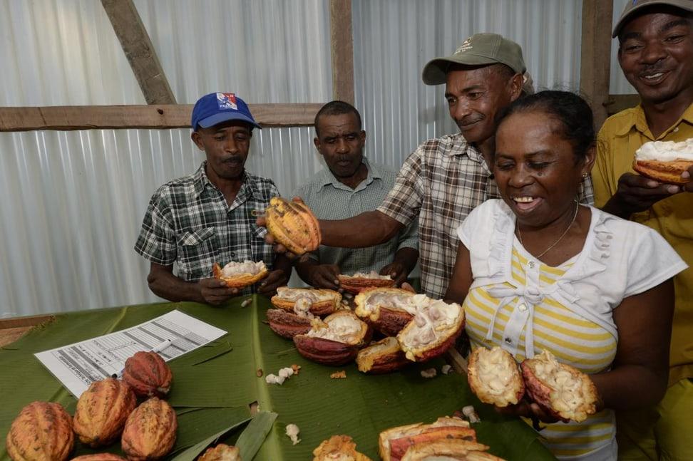 Aufbau einer Kakaoproduktion in Masoala.