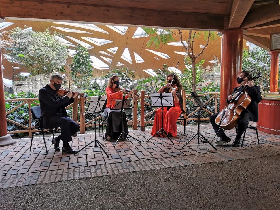 Das Streichquartett des Zürcher Kammerorchesters spielt im Kaeng Krachan Elefantenpark des Zoo Zürich.