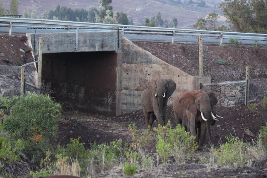 Unterführung Nationalstrasse im Elefantenkorridor in Lewa.