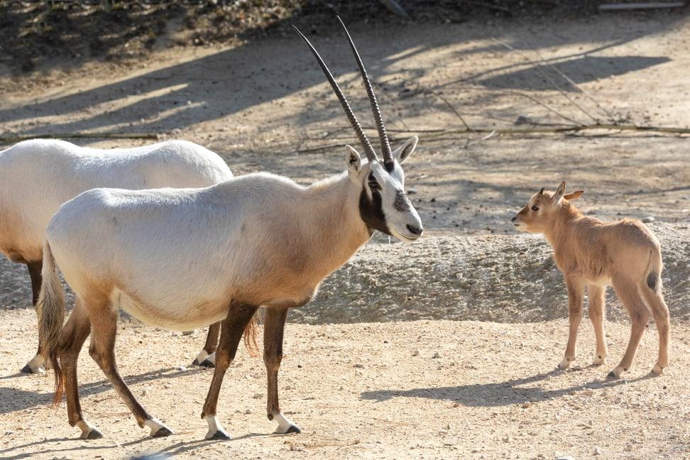 Oryx Fell