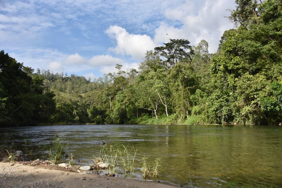 Regenwald Sumatra Factsheet