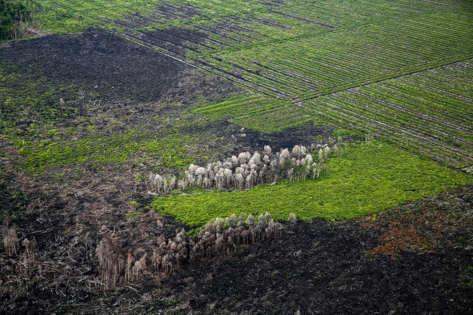 Brandrodung Regenwald Sumatra
