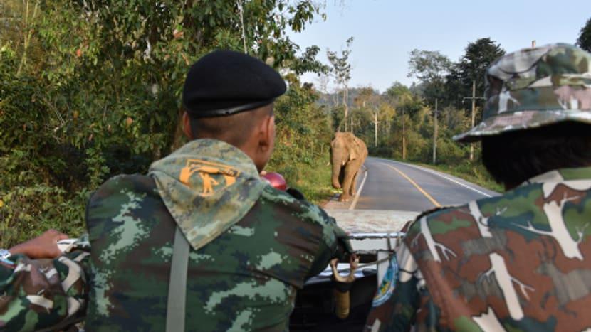 Ranger in Kaeng Krachan