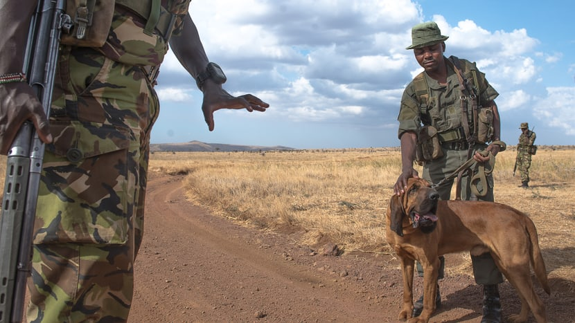 Tracker Dogs der Anti-Wilderer-Einheit im Lewa Wildlife Conservancy.