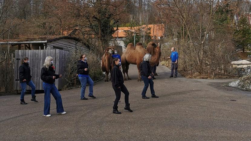 Aufnahmen für die Jerusalema-Tanzchallenge im Zoo Zürich.