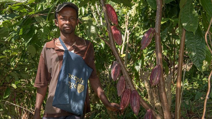 Die 2016 gepflanzten Kakaobäume beginnen Früchte zu tragen.
