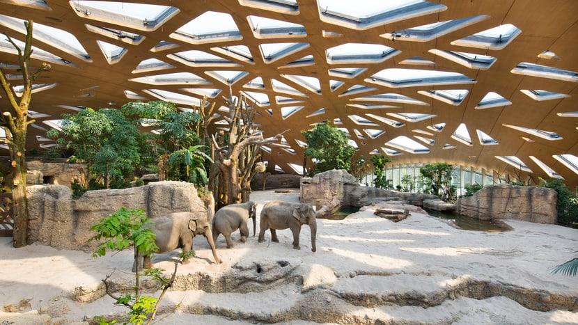 Asiatische Elefanten in der Innenanlage des Kaeng Krachan Elefantenparks im Zoo Zürich.