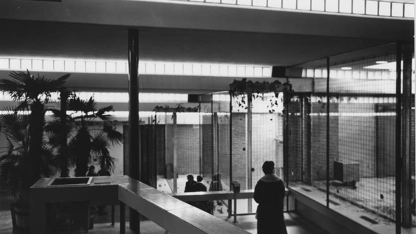 Menschenaffenhaus 1958
