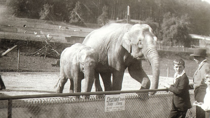Historische Aufnahmen Zoo Zürich.