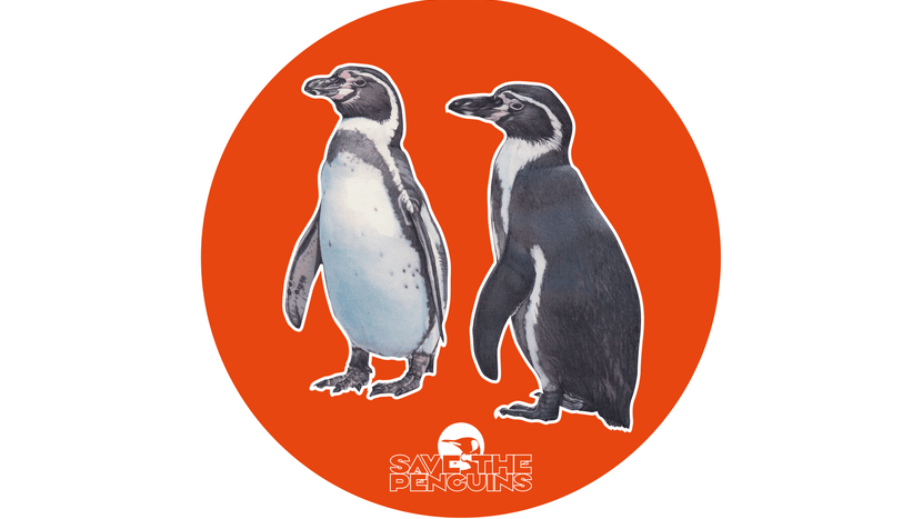 "Scan-Grafik Humboldtpinguin für die App ""Save the Penguins"""