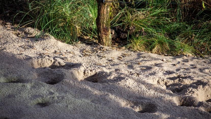 Giraffenspuren im Sand.