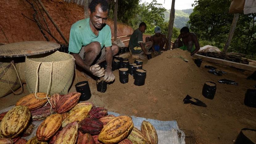 Nachhaltige Kakaoproduktion.