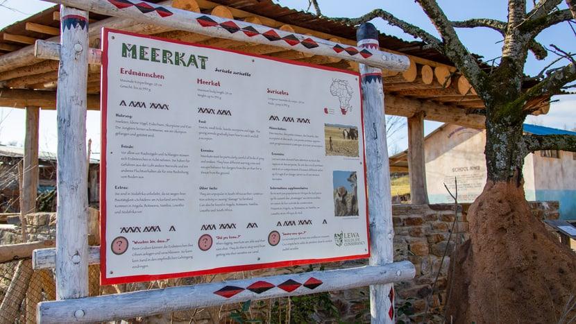 Tafel Erdmännchen in der Lewa Savanne, Stand Februar 2020.